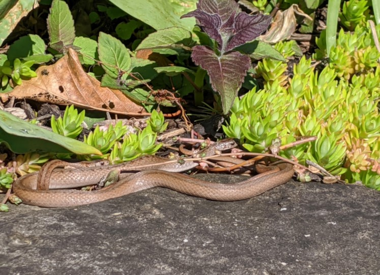 How to Repel Snakes from Your Garden?